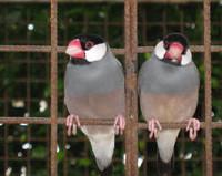 Behandlung von Vögeln